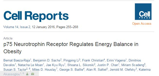 Baeza-Raja B. et al. p75 Neurotrophin Receptor Regulates Energy Balance in Obesity //Cell Reports. – 2015