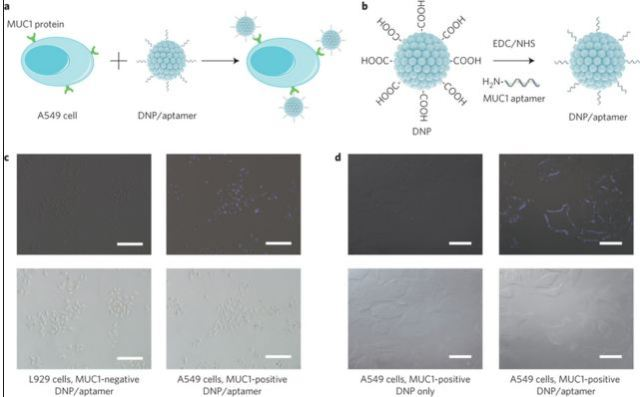 Химиотерапия, Nature nanotechnology, наночастицы