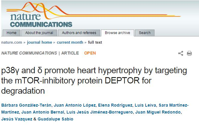 p38 [gamma] and [delta] promote heart hypertrophy by targeting the mTOR-inhibitory protein DEPTOR for degradation
