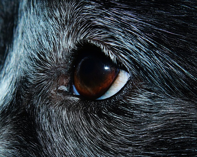 Протозоозы у кошек и собак ©️pixabay/Kapa65
