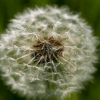 аллергия, Allergy