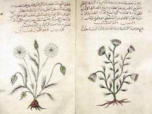 травы, рак, Cancer