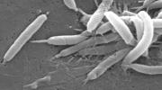 H. pylori, эозинофильный эзофагит, Alimentary Pharmacology & Therapeutics