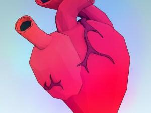 сердце, Circulation, лимфатическая система
