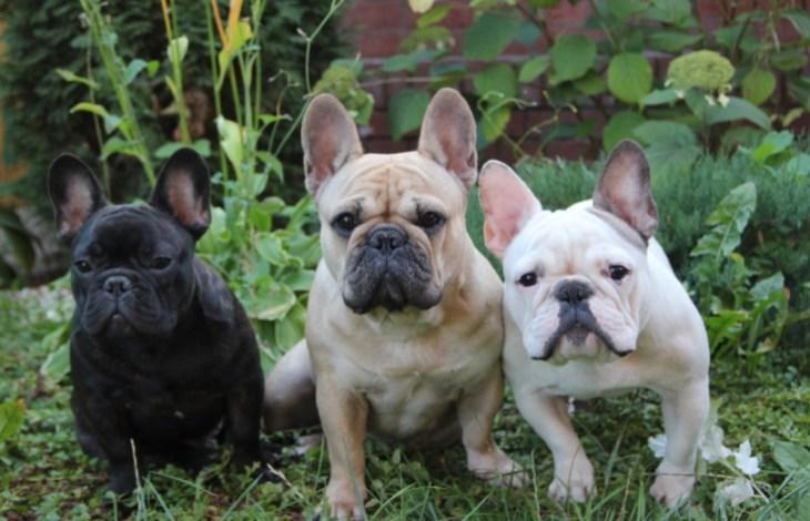 глиобластома, собаки, гены, PLOS Genetics
