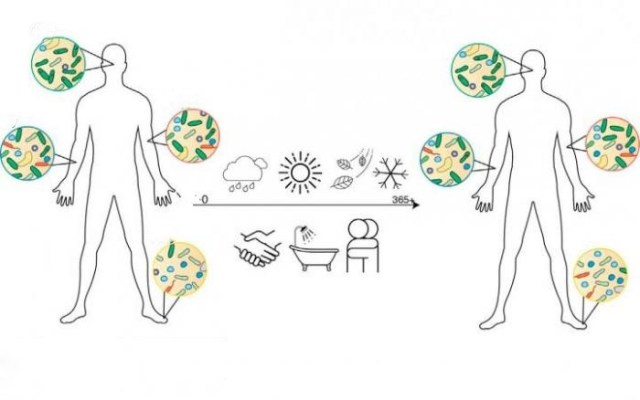 микрофлора, кожа, Cell