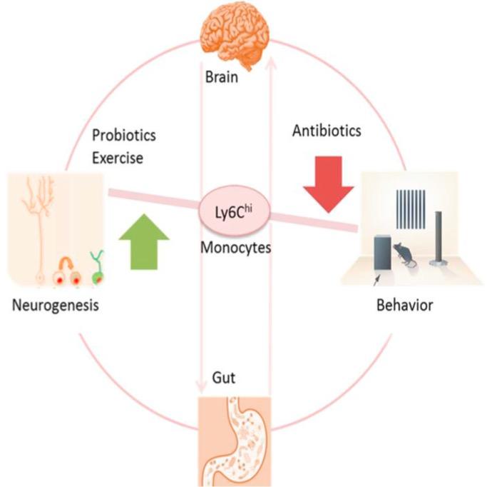 антибиотики, память, Cell Reports