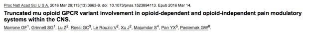 хроническая боль, обезболивающие, PNAS
