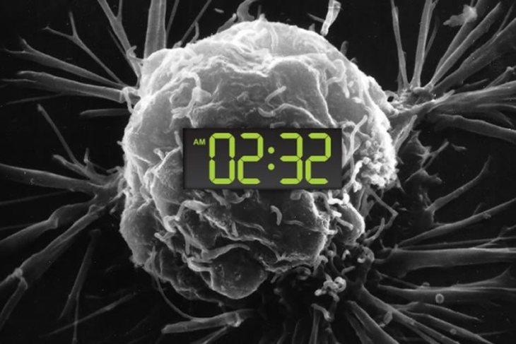рак, Cell Metabolism