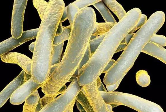 туберкулез, антитела