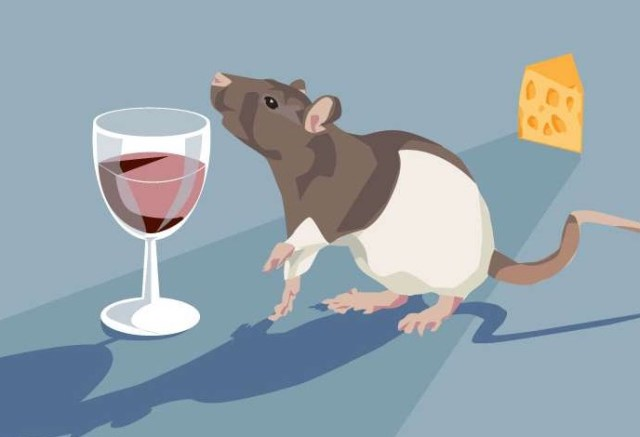 алкоголь, спирт, еда, крысы