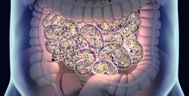 Бактерии, тревожное расстройство