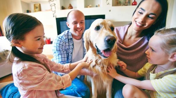Собаки, бронхиальная астма, дети, экзема
