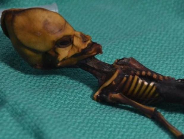 скелет Атакамы, скелет инопланетянина, гены