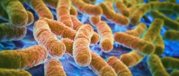 воспалительные заболевания кишечника, воспаление, токсины, E. coli