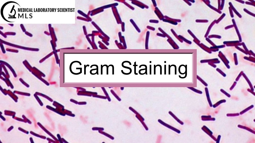 Gram Staining : Preparation of Reagents, Procedure, Results