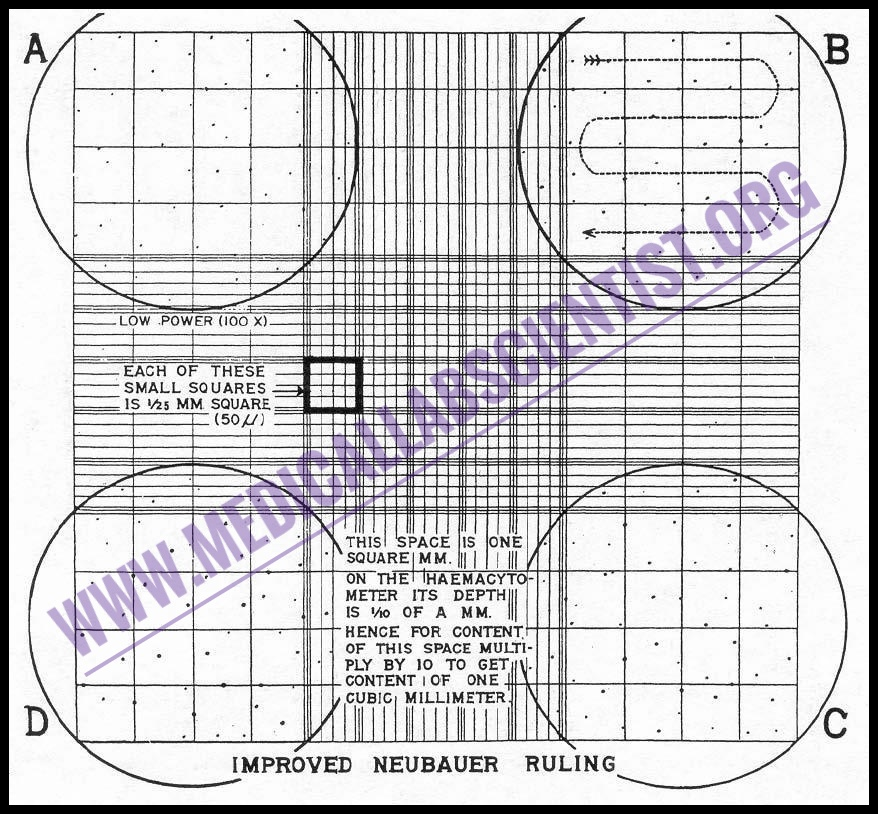 Manual Cells Counting With Hemocytometer Improved Neubauer Manual Guide