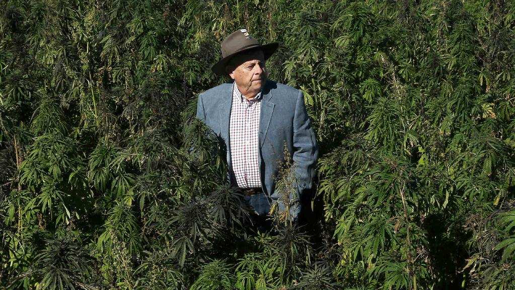 Barry Lambert, the millionaire philanthropist in a field of industrial cannabis near hunter valley