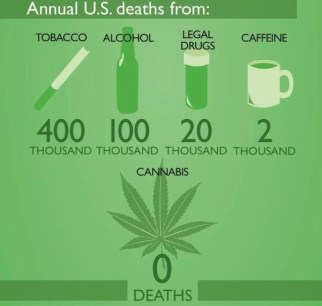 cannabis 0 deaths legal drugs 20,000 deaths