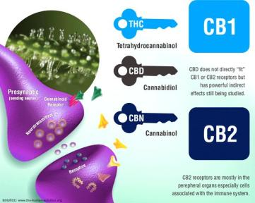 Receptors for cannabinoids