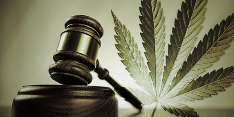 judge ruling in favour of cannabis