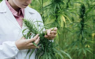 Researcher in field of cannabis