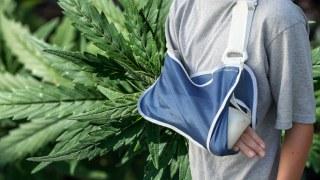 cannabis heals broken bones