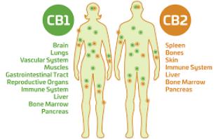 endocannabinoid receptor system