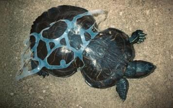 plastic six pack beer holder warped turtle shell