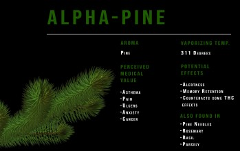 pinene terpene profile