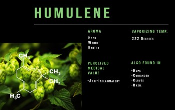 Humulene cannabis terpene profile info graph