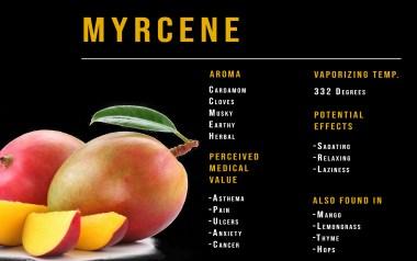 Myrcene terpene profile