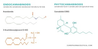 Endocannabinoid system and chemical diagram