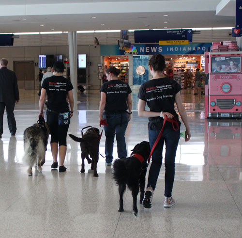 Medical Mutts trainers with a group of dogs for an outing at Indianapolis International Airport