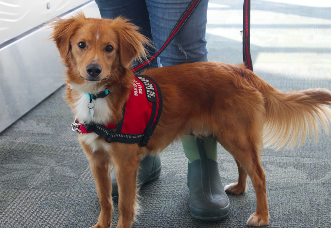How to Get a Service Dog