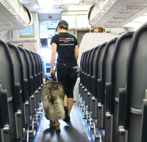 Can your ESA become your Service Dog and fly with you?