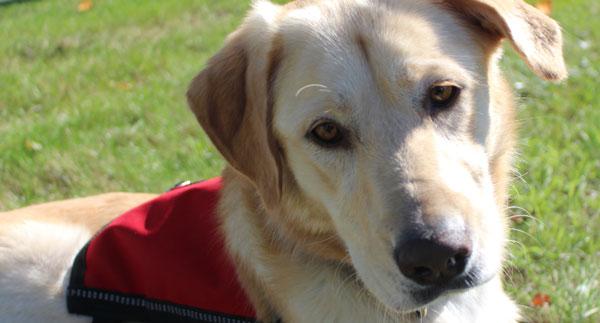 A sound Temperament Dog