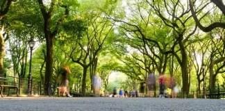 High-levels-of-neighbourhood-greenness