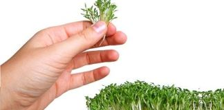 Watercress-Extract-Can-Detoxify-Carcinogens