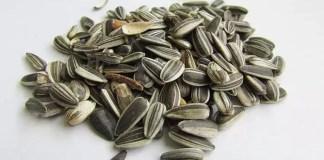 omega 6 fatty acids