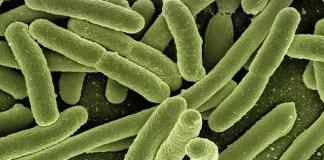 antibiotic-resistant E.coli