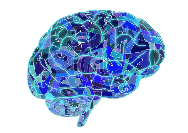 what does DMT do to the brain