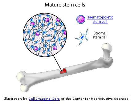 cow skeleton bones diagram 5 wire trailer brake wiring medical pictures info – bone cell