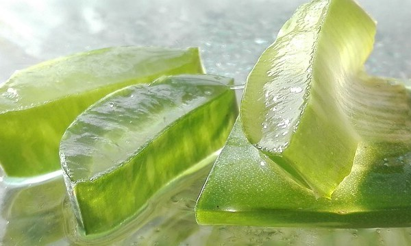 Top 10 Health Benefits of Aloe vera that will make your life easy