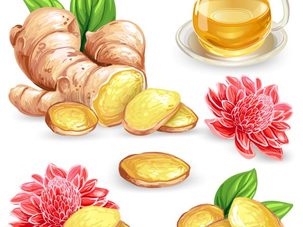 Ginger for Weight Loss – Detailed Guide