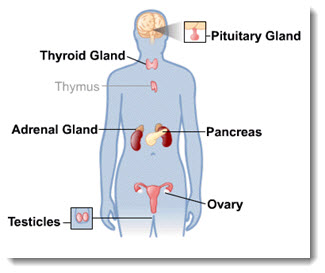 Endocrine System Quiz