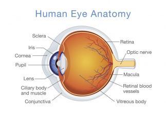 Ophthalmology Quiz