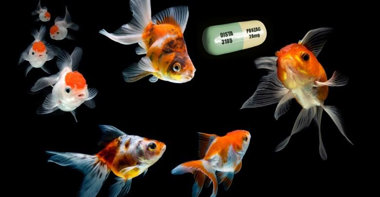 أدوية مضادة للأكتئاب في مياهنا