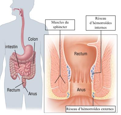 anatomie hémorroïdes