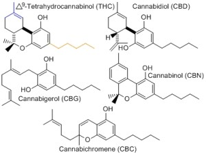 cannabinoids2